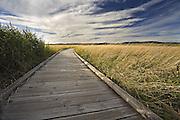 Boardwalk, Tamar River - Tasmania