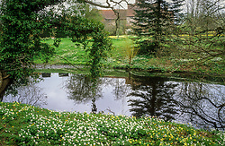 Looking towards the house at Great Dixter from the Lower Moat with Anemone nemorosa, Primula vulgaris and Ranunculus auricomus growing wild. Windflowers, Wood anemones