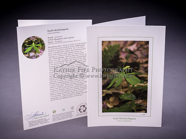 Often mistaken for the Indian Cucumber Root, the Small Whorled Pogonia is a rare species in NH, and one of the few species that is listed as protected under the Native Plant Protection Act. <br /> <br /> Artemis Photo Greeting Cards featuring NH native flora and fauna and historic sites. The cards are made exclusively in NH made from 100% FSC recycled paper, manufactured with wind and water power, and are archival acid free paper. Each card includes details on the back about the image, including interesting anecdotes, historic facts, conservation status, and recipes.