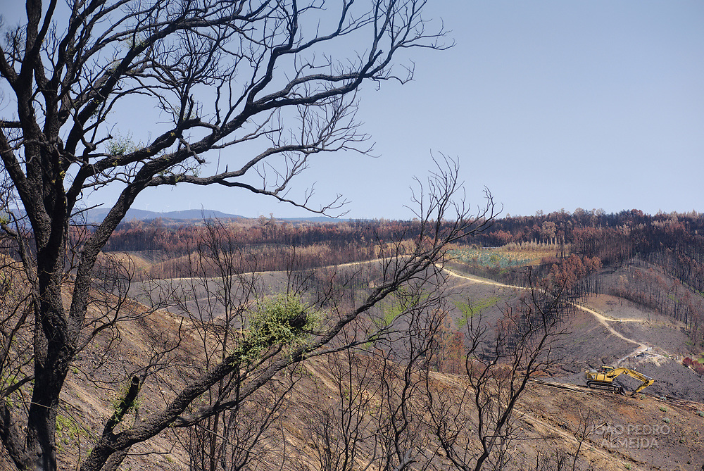 Cutting down the scorched trees from the wildfires.