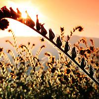 Sunrise through wild flower
