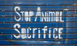 Stop Animal Sacrifice Grafitti