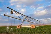 CLM Farm, Dell City, TX