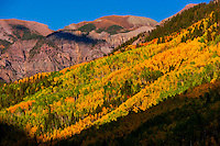 Fall color, Camp Bird Road, near Ouray, in the San Juan Mountains of southwest Colorado USA.