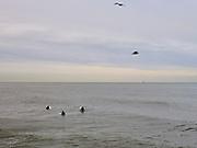 Surfers in de ochtend wachten op een grote golf. |  Surfers in the morning are waiting for a big wave