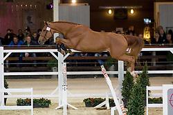 027, Nondeju JW<br /> BWP Hengsten keuring Koningshooikt 2015<br /> © Hippo Foto - Dirk Caremans<br /> 23/01/16