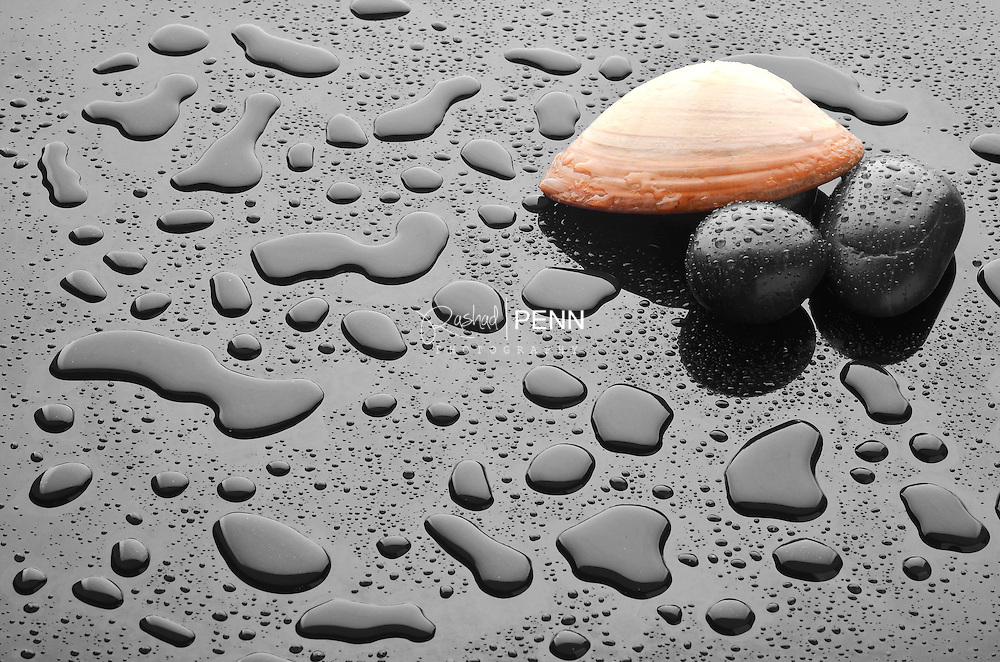 Calming image of wet black stones and shells.