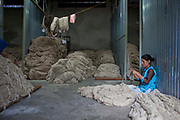 A female factory worker sits and sorts through the newly arrived bundles of raw wool in the store area of the R.C Rug Factory in the Narayanthan area of Kathmandu, Nepal. The company export rugs and carpets to Europe the U.S and Canada, and rely on the GoodWeave certificate of approval to boast excellent quality and fair conditions for its workers, as the carpet factory industry in Nepal is notorious for providing poor working conditions and forcing young children into labour.