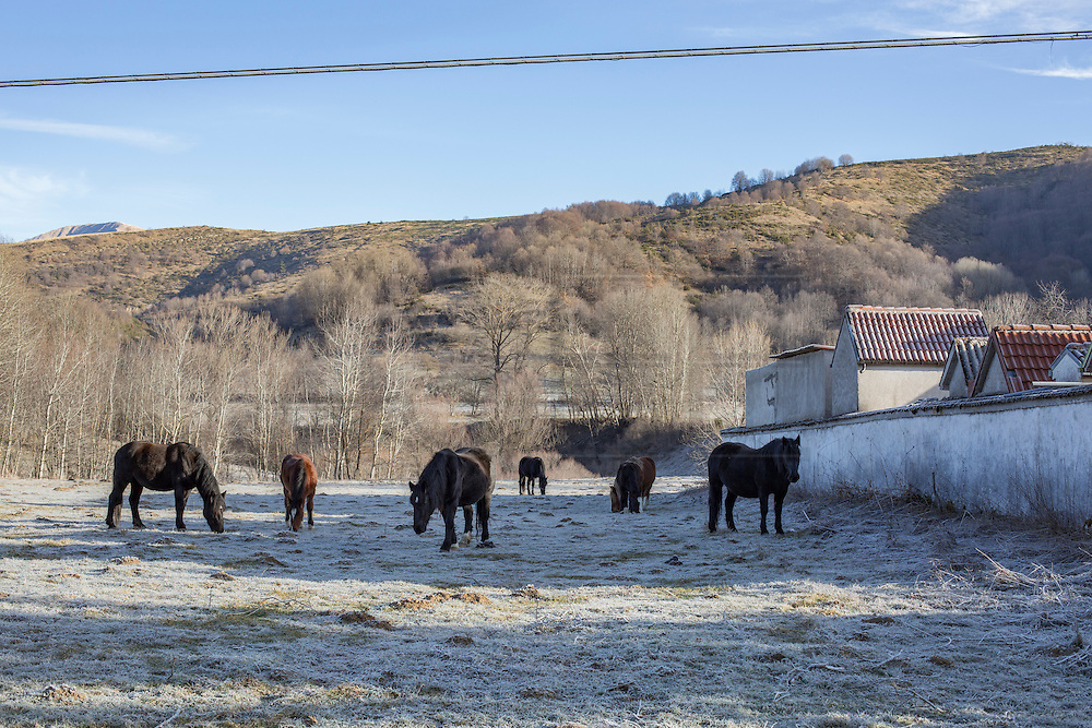Black horses grazing beside a cemetery.