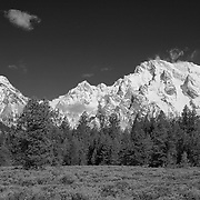 Grand Tetons, WY - Alpine Forest - Infrared Black & White