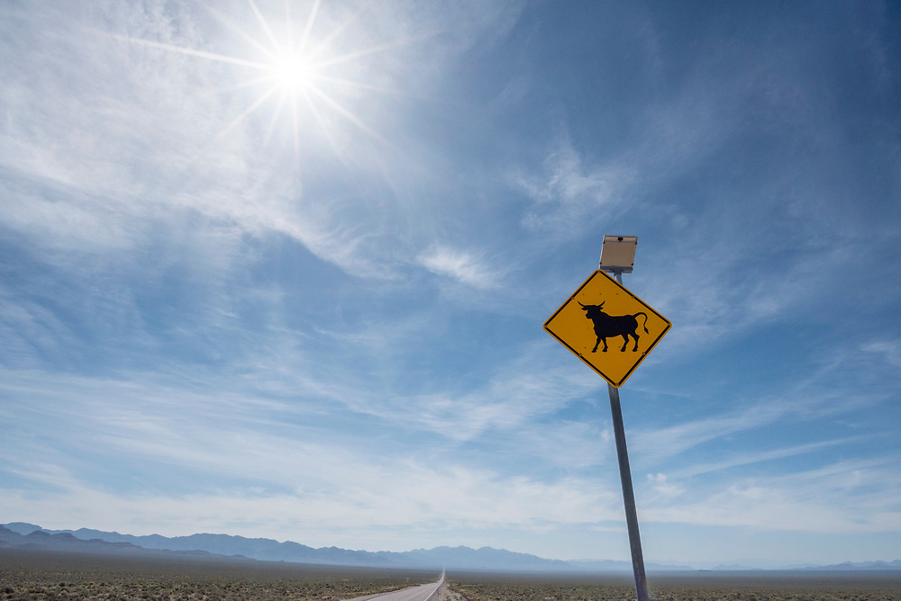 Solar powered cattle sign on a highway in the Nevada desert.