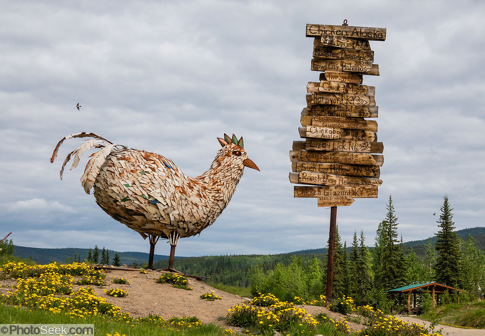 Metal chicken sculpture & distance signpost for Chicken, Alaska, USA. Chicken is one of the few surviving gold rush towns in Alaska. Mining and tourism keep it alive in the summer, and about 17 people stay through the winter. Gold miners settling here in the late 1800s wanted to name it after the local ptarmigan birds, but couldn't agree on the spelling, so instead called it Chicken to avoid embarrassment. A portion of Chicken including early 1900s buildings and the F.E. Company Dredge No. 4 (Pedro Dredge) is listed as the Chicken Historic District on the National Register of Historical Places. Chicken can be reached via Chicken Airport or Alaska Route 5, the Taylor Highway, which is not maintained from mid-October through mid-March.