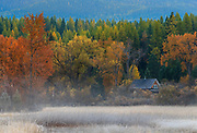 Fall colors near Swan Lake, Montana