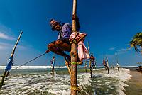 Stilt fishermen, Ahangama, Southern Province, Sri Lanka.