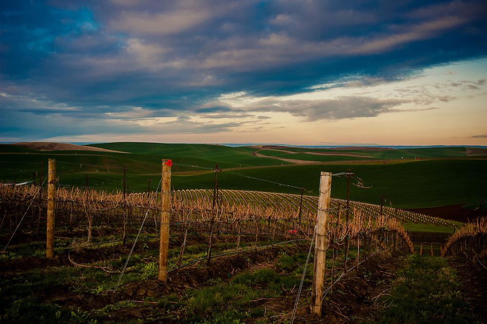 Spring Valley Vineyards Sunrise in Walla Walla Washington