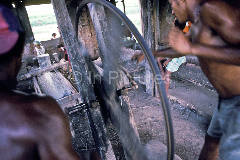 Poor cocoa workers in their spare time mill Manioc into flour with very primitive tools, bahia, Brazil