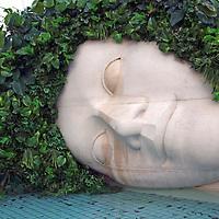 Asia, Japan, Hakone. Resting head of ivy.