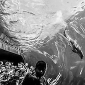 Aquarium of Genova (Italy)