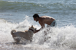 Licensed to London News Pictures. 08/09/2021. Brighton, UK. Last chance of sun. Students, A man and his dog cool off with a splash in the sea at Brighton Beach, East Sussex. Weather forecaster predict an end to the hot weather as thunderstorms are set to hit England tonight. Photo credit: Alex Lentati/LNP