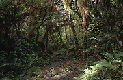 The forest around the Glaciers of of the South Island´s West Coast has been dense and damp in 2001.