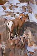 Watercolor style artistic effects applied to a photograph of a bighorn ram standing on a ledge near Jackson Hole, WY.