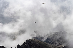 16-09-2018 ESP: BvdGF La Vuelta a Sierra Nevada day 2, Pico del Veleta<br /> Second day of the mountainbike and cycling challenge from Capileira to Pico del Veleta (3396m) / griffon vultures