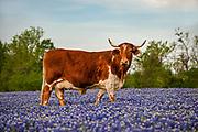 Grimes County, Texas