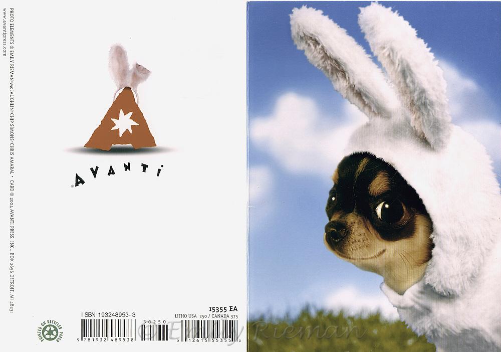 Easter Bunny greeting card, Avanti Press