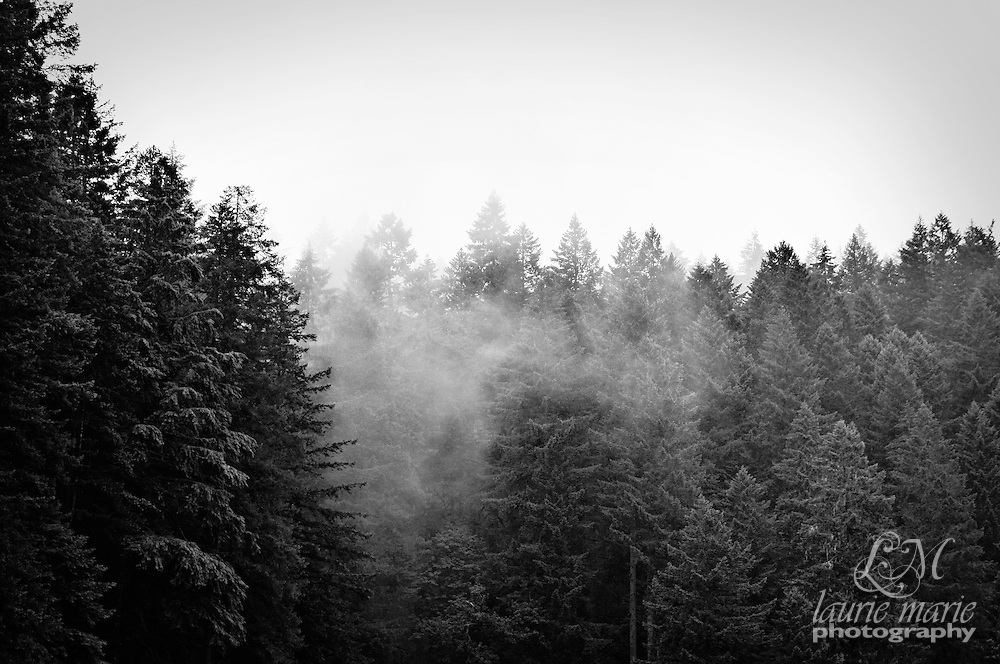 A low cloud bank gives a misty, foggy feel to this section of woods
