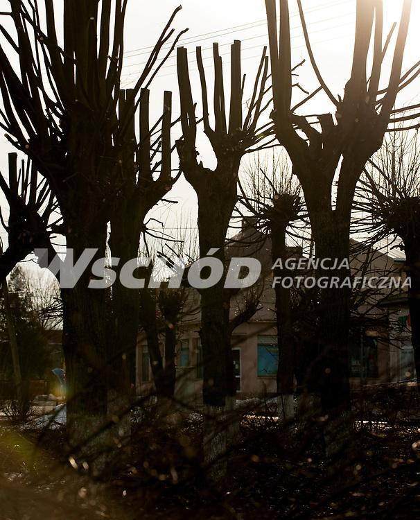 07.03.2013 Narew woj podlaskie N/z surrealistyczny pejzaz po wiosennej przycince drzew fot Michal Kosc / AGENCJA WSCHOD