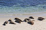 Seals on Shore in La Jolla, San Diego, California