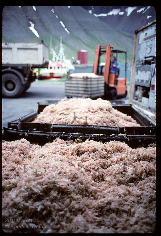 Forklift operator readies bins of shrimp shells for transport to fishmeal factory; Isafjordur. Iceland