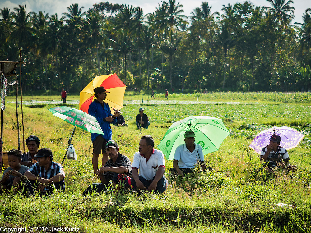 09 OCTOBER 2016 - JEMBRANA, BALI, INDONESIA: Spectators watch a makepung (buffalo race) in Tuwed, Jembrana, Bali. Makepung is buffalo racing in the district of Jembrana, on the west end of Bali. The Makepung season starts in July and ends in November. A man sitting in a small cart drives a pair of buffalo bulls around a track cut through rice fields in the district. It's a popular local past time that draws spectators from across western Bali.     PHOTO BY JACK KURTZ