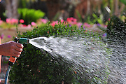 Watering a garden with a hose pipe