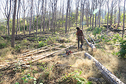 Harvesting Pachote Trees - Making 2x 6 Boards