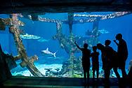 The Shark Reef Aquarium at Mandalay Bay.
