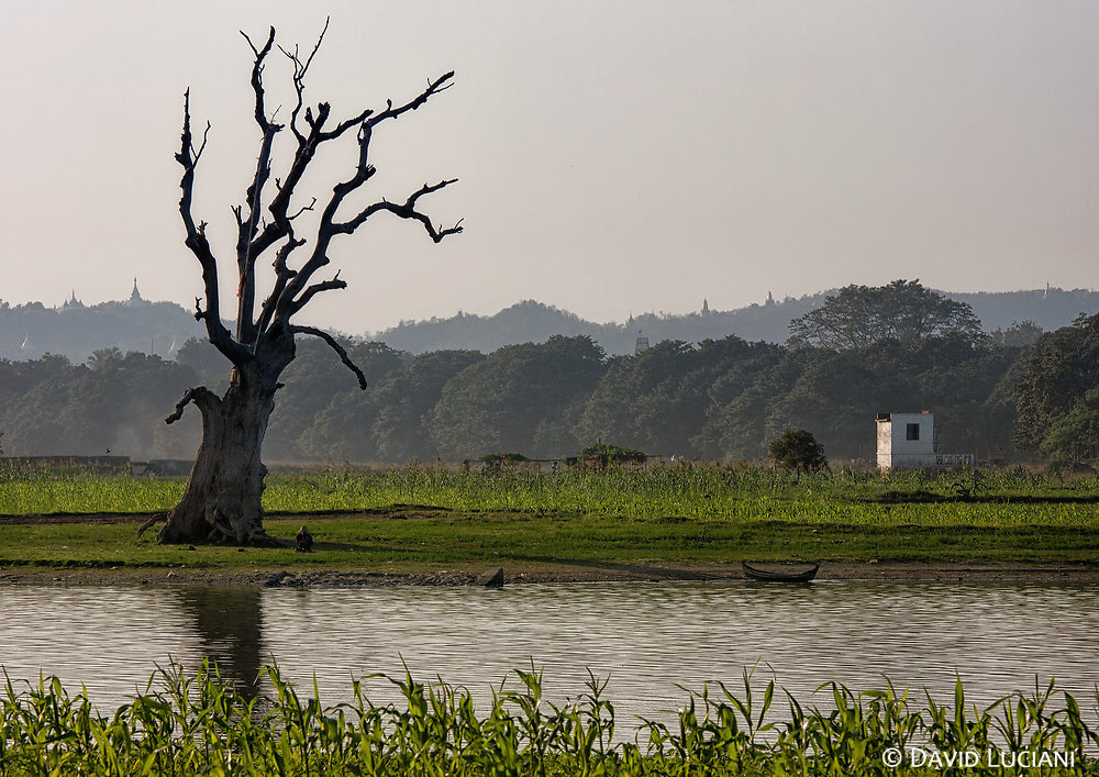 The tree set opposite to the U Bein Bridge is probably the most photographed tree in the region.
