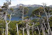 Lago Escondido, near the Port of Ushuaia, southernmost city in the world. Tierra del Fuego, Argentina.