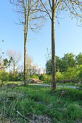 Cirkelbos, Almeerderhout, Almere, Flevoland, Netherlands