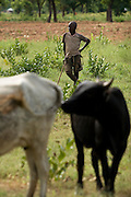 """Alhassan Niedow, 13, herds cattle near the village of Dungu after returning from school on Friday June 8, 2007. """"School is very far away,"""" he says. """" I walk to the school, by the time I get there I'm tired."""" Alhassan has four brothers and three sisters; he's the only one who attends school."""