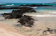 Lava Heron<br /> Butorides sundevalli<br /> Isabela Island<br /> Galapagos Islands<br /> ECUADOR.  South America<br /> ENDEMIC TO THE ISLANDS