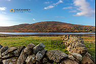 Small lake with stone fenceand sheep in pasture near Clifden, Ireland