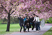 A group of tourists take a selfie photograph with a mobile phone under cherry blossom trees during rain and wet weather on April 30, 2018 in Greenwich Park in London, England.