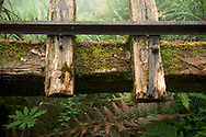 An abandoned railway runs through a clouded forest on Tai Ping Shan Mountain, a popular wilderness area in northern Taiwan.