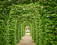 Vine covered walkway. Tulip festival at Keukenhof Gardens in Lisse, Netherlands. Image taken with a Leica X2 camera.