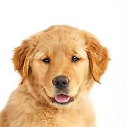 20160605 Puppies-Martha