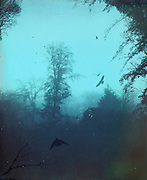 Moody foggy trees on a November morning - textured and tinted photograph<br /> Prints & more:<br /> http://www.redbubble.com/people/dyrkwyst/works/17303330-moody-blues?ref=recent-owner