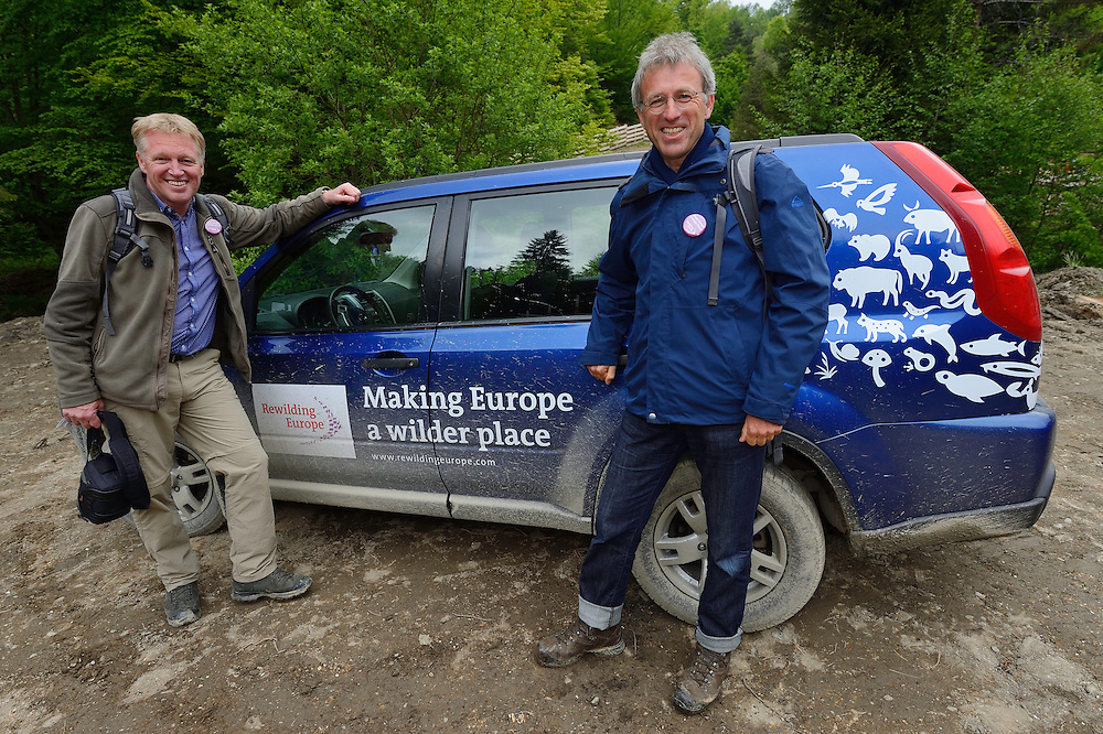 Frans Schepers and Wouter Helmer. Rewilding Europe, at the release of European bison, Bison bonasus, in the Tarcu mountains nature reserve, Natura 2000 area, Southern Carpathians, Romania. The release was actioned by Rewilding Europe and WWF Romania in May 2014.