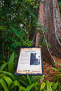 Jelawai Heritage Tree at Singapore Botanic Gardens, Singapore, Republic of Singapore