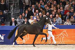 591 - Gironn L<br /> KWPN Stallion Selection - 's Hertogenbosch 2014<br /> © Dirk Caremans